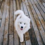 Best Dog Walking Jobs For Beginners & Pros